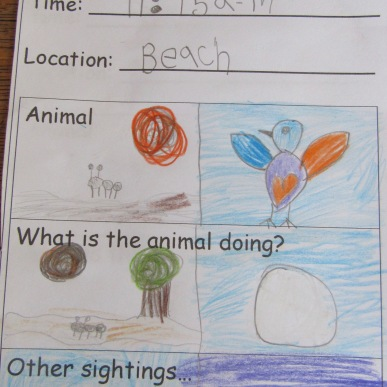 Animal Sightings